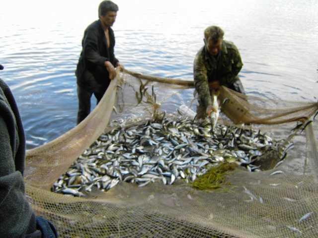 рыбу ловил рыболов в реку уплыл весь улов